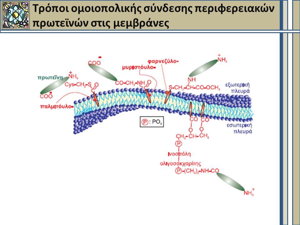 Τρόποι ομοιοπολικής σύνδεσης περιφερειακών πρωτεϊνών στις μεμβράνες