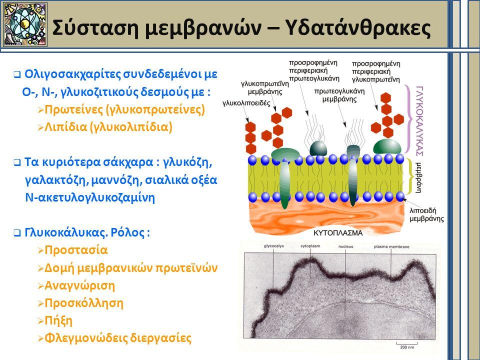 Σύσταση μεμβρανών – Υδατάνθρακες  Ολιγοσακχαρίτες συνδεδεμένοι με Ο-, Ν-, γλυκοζιτικούς δεσμούς με :  Πρωτείνες (γλυκοπρωτείνες)  Λιπίδια (γλυκολιπίδια)  Τα κυριότερα σάκχαρα : γλυκόζη, γαλακτόζη, μαννόζη, σιαλικά οξέα Ν-ακετυλογλυκοζαμίνη  Γλυκοκάλυκας.