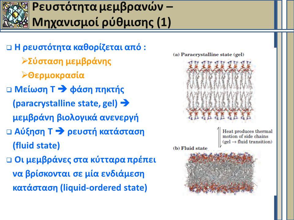 Ρευστότητα μεμβρανών – Μηχανισμοί ρύθμισης (1)  Η ρευστότητα καθορίζεται από :  Σύσταση μεμβράνης  Θερμοκρασία  Μείωση Τ  φάση πηκτής (paracrystalline state, gel)  μεμβράνη βιολογικά ανενεργή  Aύξηση Τ  ρευστή κατάσταση (fluid state)  Οι μεμβράνες στα κύτταρα πρέπει να βρίσκονται σε μία ενδιάμεση κατάσταση (liquid-ordered state)