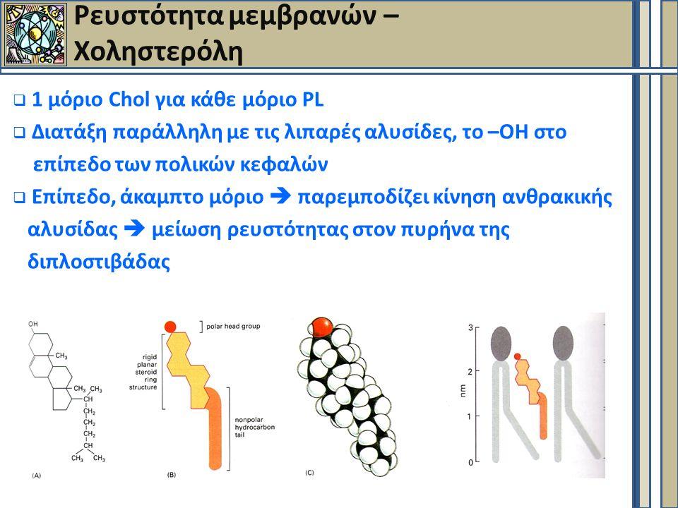  1 μόριο Chol για κάθε μόριο PL  Διατάξη παράλληλη με τις λιπαρές αλυσίδες, το –ΟΗ στο επίπεδο των πολικών κεφαλών  Επίπεδο, άκαμπτο μόριο  παρεμποδίζει κίνηση ανθρακικής αλυσίδας  μείωση ρευστότητας στον πυρήνα της διπλοστιβάδας Ρευστότητα μεμβρανών – Χοληστερόλη