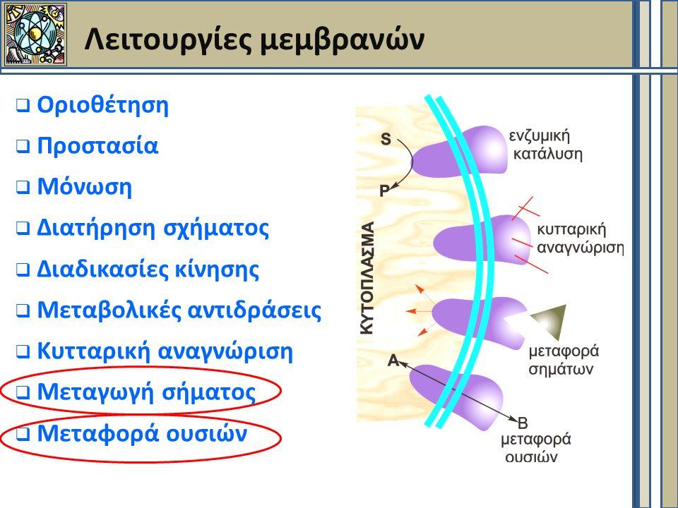 Λειτουργίες μεμβρανών  Οριοθέτηση  Προστασία  Μόνωση  Διατήρηση σχήματος  Διαδικασίες κίνησης  Μεταβολικές αντιδράσεις  Κυτταρική αναγνώριση  Μεταγωγή σήματος  Μεταφορά ουσιών