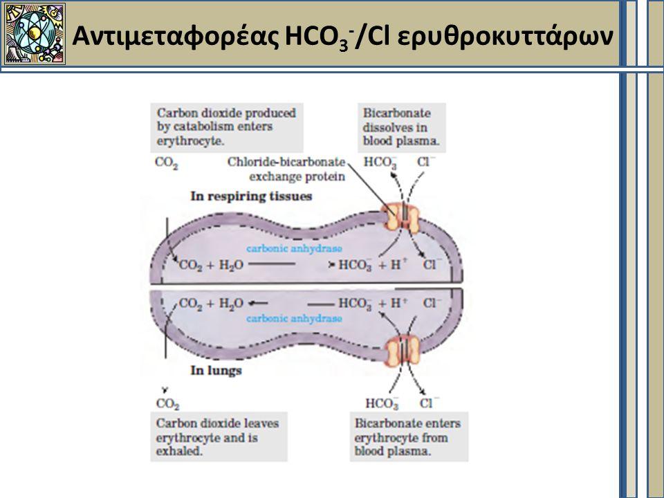 Αντιμεταφορέας HCO 3 - /Cl ερυθροκυττάρων