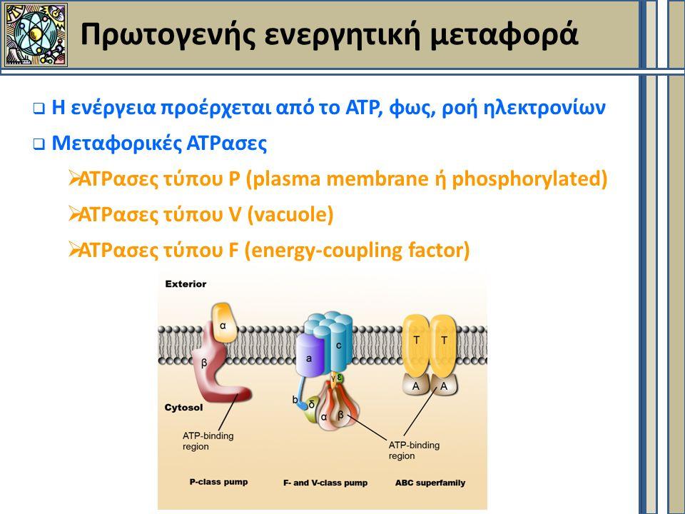 Πρωτογενής ενεργητική μεταφορά  Η ενέργεια προέρχεται από το ΑΤΡ, φως, ροή ηλεκτρονίων  Μεταφορικές ΑΤΡασες  ΑΤΡασες τύπου Ρ (plasma membrane ή phosphorylated)  ΑΤΡασες τύπου V (vacuole)  ΑΤΡασες τύπου F (energy-coupling factor)
