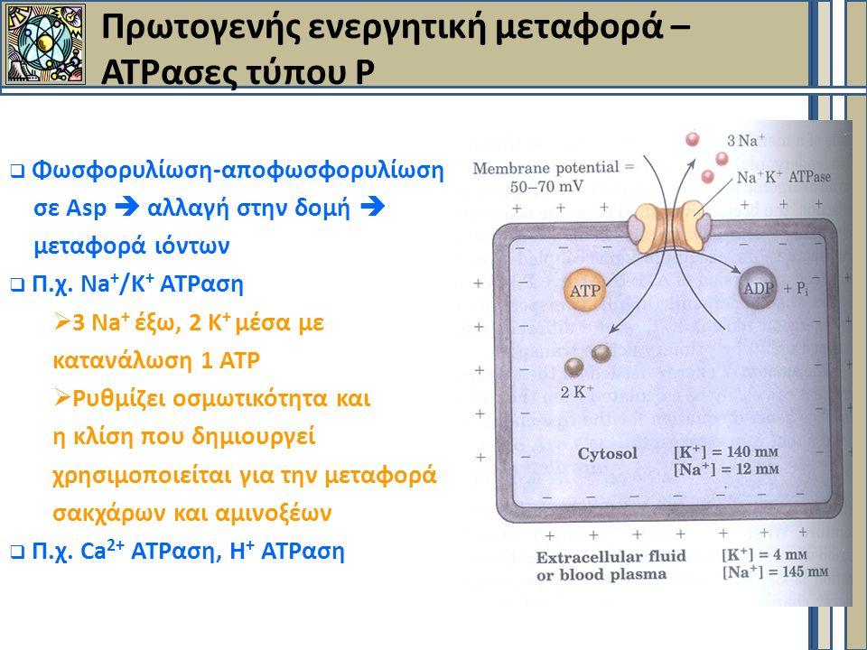 Πρωτογενής ενεργητική μεταφορά – ΑΤΡασες τύπου Ρ  Φωσφορυλίωση-αποφωσφορυλίωση σε Asp  αλλαγή στην δομή  μεταφορά ιόντων  Π.χ.