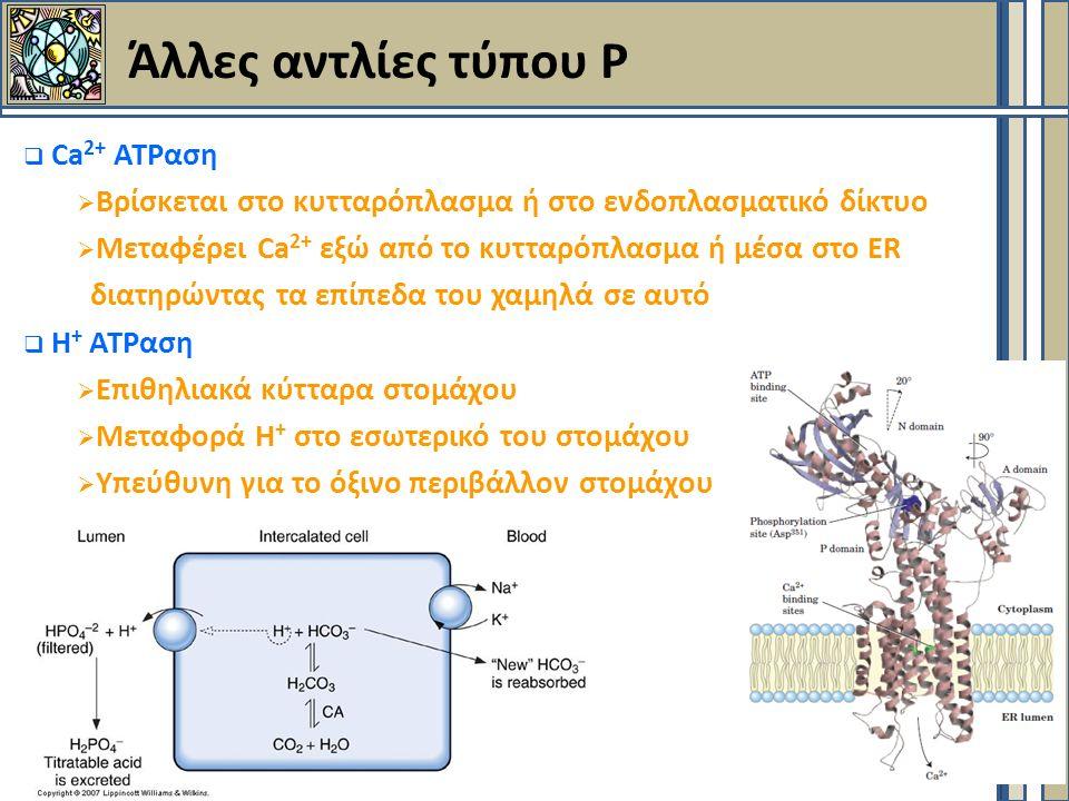  Ca 2+ ΑΤΡαση  Βρίσκεται στο κυτταρόπλασμα ή στο ενδοπλασματικό δίκτυο  Μεταφέρει Ca 2+ εξώ από το κυτταρόπλασμα ή μέσα στο ER διατηρώντας τα επίπεδα του χαμηλά σε αυτό  Η + ΑΤΡαση  Επιθηλιακά κύτταρα στομάχου  Μεταφορά Η + στο εσωτερικό του στομάχου  Υπεύθυνη για το όξινο περιβάλλον στομάχου Άλλες αντλίες τύπου Ρ
