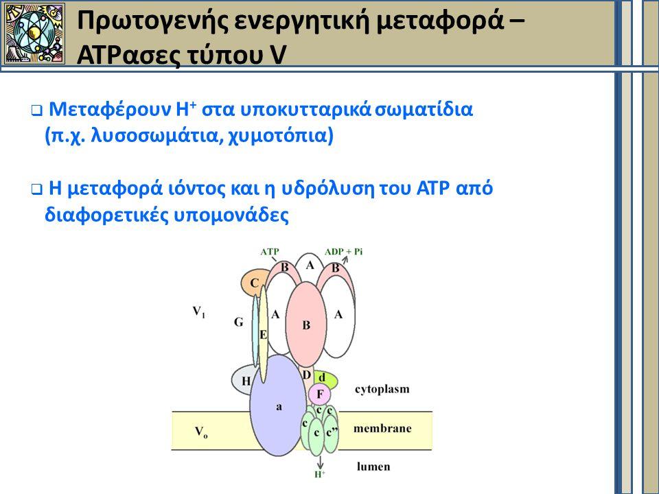Πρωτογενής ενεργητική μεταφορά – ΑΤΡασες τύπου V  Mεταφέρουν Η + στα υποκυτταρικά σωματίδια (π.χ.