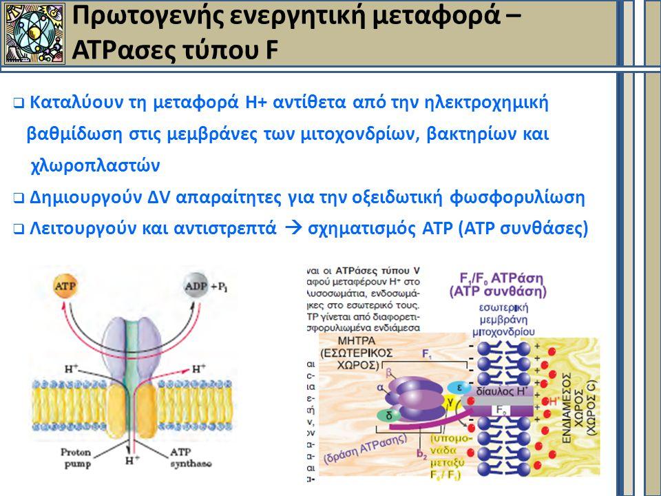 Πρωτογενής ενεργητική μεταφορά – ΑΤΡασες τύπου F  Καταλύουν τη μεταφορά Η+ αντίθετα από την ηλεκτροχημική βαθμίδωση στις μεμβράνες των μιτοχονδρίων, βακτηρίων και χλωροπλαστών  Δημιουργούν ΔV απαραίτητες για την οξειδωτική φωσφορυλίωση  Λειτουργούν και αντιστρεπτά  σχηματισμός ΑΤΡ (ΑΤΡ συνθάσες)