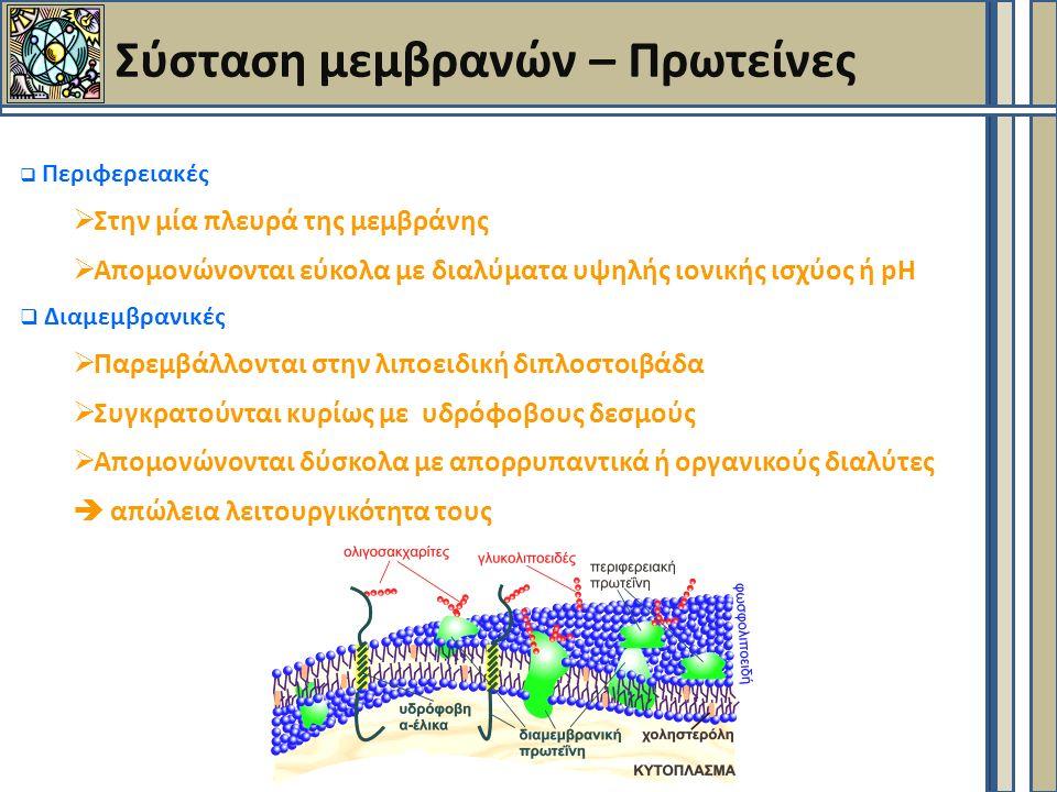 Πρωτεινικής φύσεως δίαυλοι-πόροι  Η 3D δομή των πρωτεϊνών δημιουργεί υδατοδιαλυτή οπή μέσα στη μεμβράνη  Δεν συνδέεται η ένωση με την πρωτείνη  Διαφορά πόρου (pore) – δίαυλου (channel) : Ο δίαυλος έχει εξειδίκευση και ανοίγει σε απόκριση ερεθισμάτων  Στο εσωτερικό της μεμβράνης δομή α-έλικας.