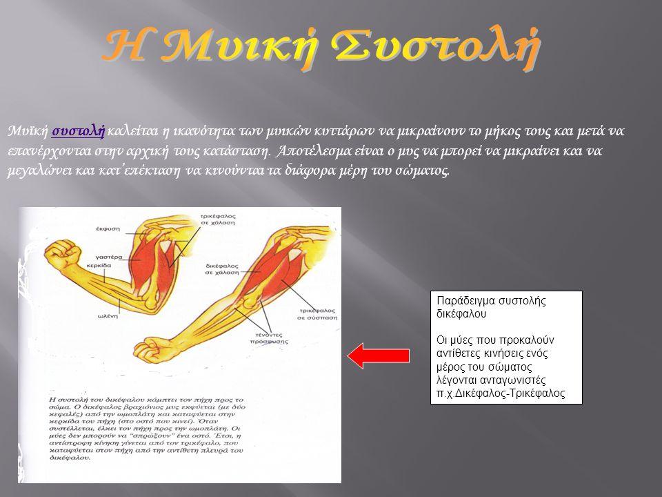 Μυϊκή συστολή καλείται η ικανότητα των μυικών κυττάρων να μικραίνουν το μήκος τους και μετά να επανέρχονται στην αρχική τους κατάσταση. Αποτέλεσμα είν