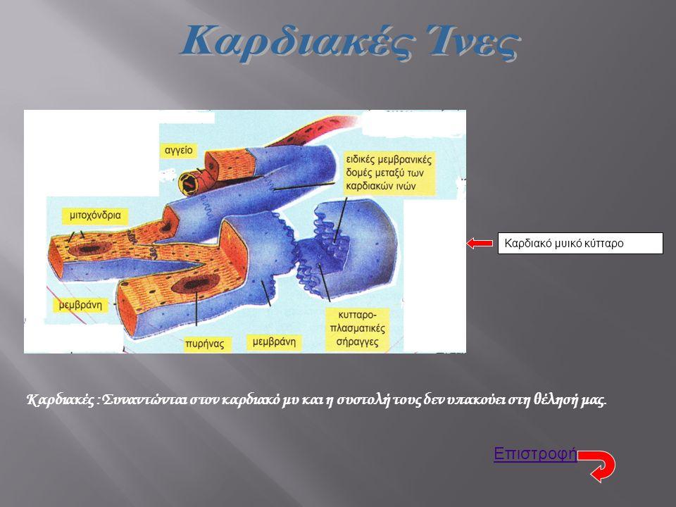Καρδιακό μυικό κύτταρο Καρδιακές :Συναντώνται στον καρδιακό μυ και η συστολή τους δεν υπακούει στη θέλησή μας. Επιστροφή