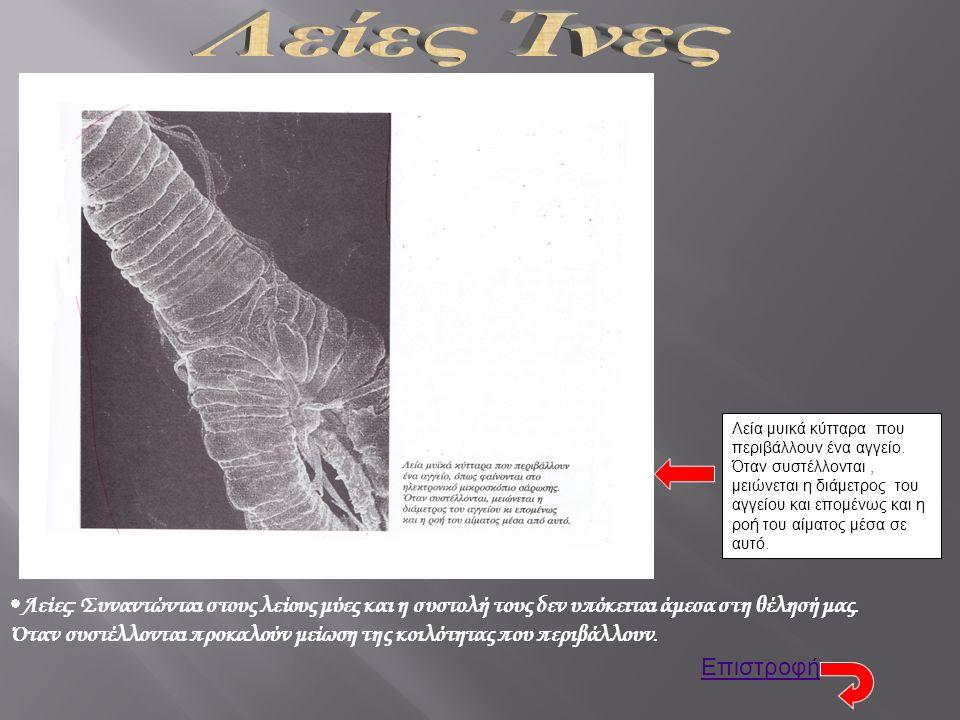 Λεία μυικά κύτταρα που περιβάλλουν ένα αγγείο.
