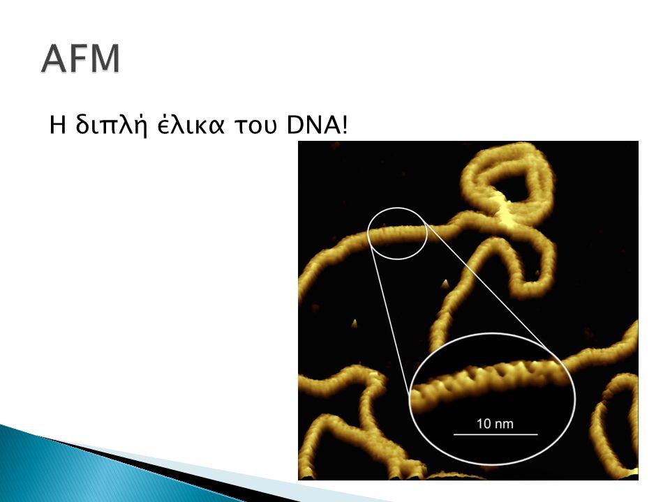 Η διπλή έλικα του DNA!