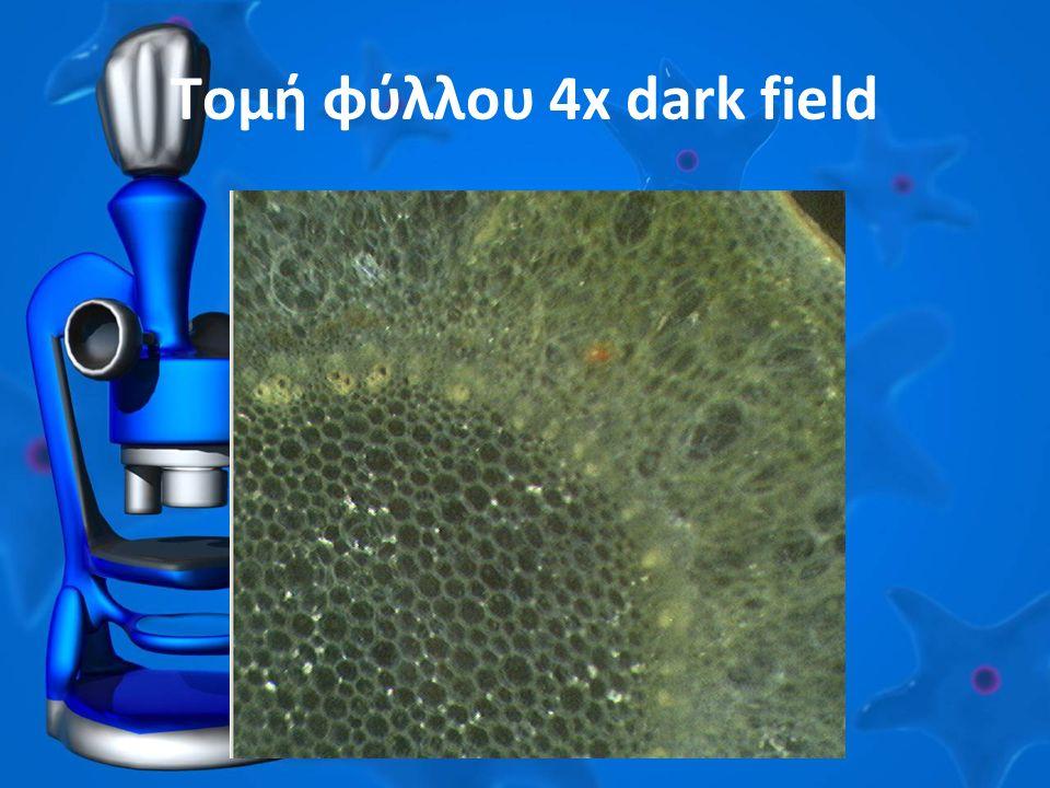 Τομή φύλλου 4x dark field