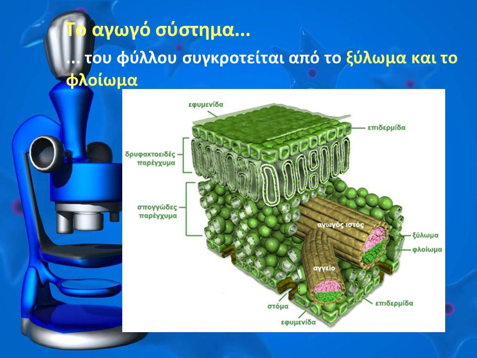 Το αγωγό σύστημα...... του φύλλου συγκροτείται από το ξύλωμα και το φλοίωμα