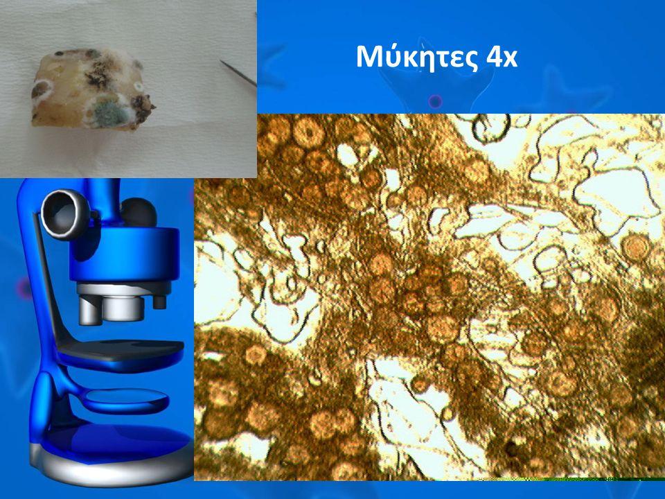 Μύκητες 4x