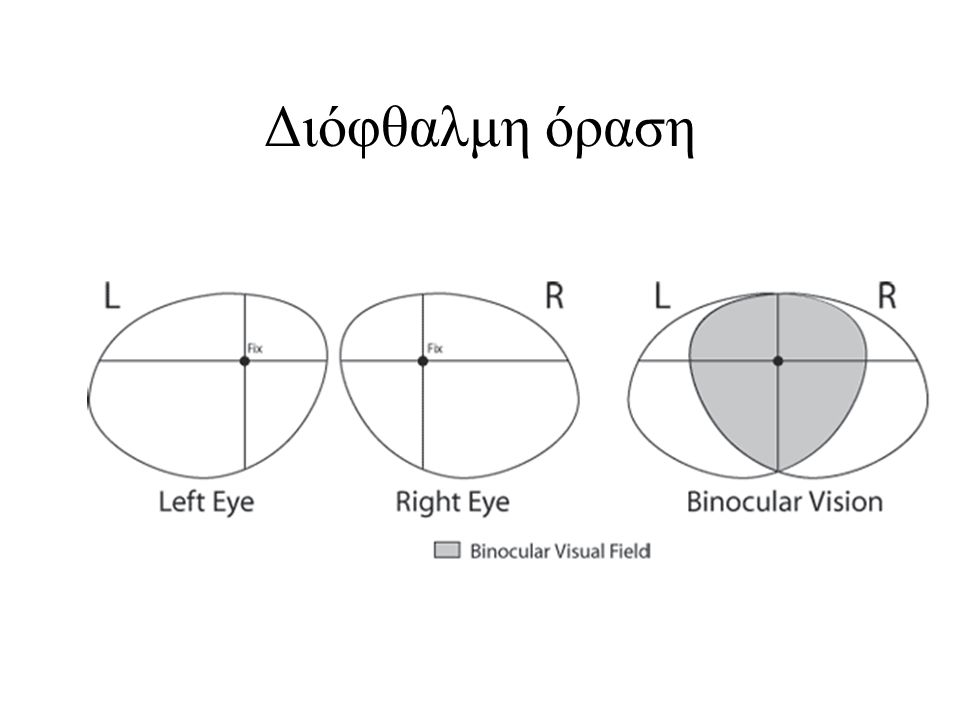 Διόφθαλμη όραση