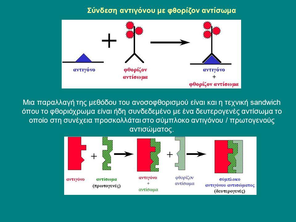 Σύνδεση αντιγόνου με φθορίζον αντίσωμα Μια παραλλαγή της μεθόδου του ανοσοφθορισμού είναι και η τεχνική sandwich όπου το φθοριόχρωμα είναι ήδη συνδεδεμένο με ένα δευτερογενές αντίσωμα το οποίο στη συνέχεια προσκολλάται στο σύμπλοκο αντιγόνου / πρωτογενούς αντισώματος.