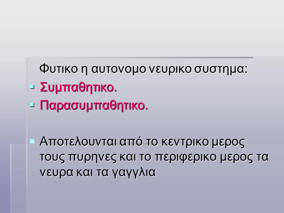  Πλαγια δεσμη:  -το ερυθρονωτιαιο. -το ελαιονωτιαιο.