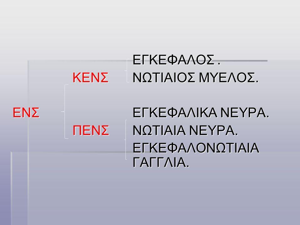 ΕΓΚΕΦΑΛΟΝΩΤΙΑΙΟ ΝΕΥΡΙΚΟ ΣΥΣΤΗΜΑ  ΚΕΝΤΡΙΚΟ-εγκεφαλος βρισκεται στην κοιλοτητα του κρανιου με βαρος 1300- 1400 γραμ στον αντρα και 1200-1300 γραμ στην γυναικα.