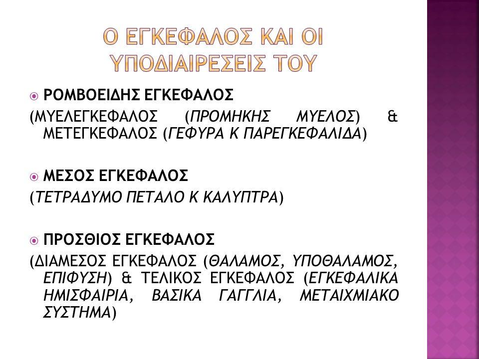  ΡΟΜΒΟΕΙΔΗΣ ΕΓΚΕΦΑΛΟΣ (ΜΥΕΛΕΓΚΕΦΑΛΟΣ (ΠΡΟΜΗΚΗΣ ΜΥΕΛΟΣ) & ΜΕΤΕΓΚΕΦΑΛΟΣ (ΓΕΦΥΡΑ Κ ΠΑΡΕΓΚΕΦΑΛΙΔΑ)  ΜΕΣΟΣ ΕΓΚΕΦΑΛΟΣ (ΤΕΤΡΑΔΥΜΟ ΠΕΤΑΛΟ Κ ΚΑΛΥΠΤΡΑ)  ΠΡΟΣ