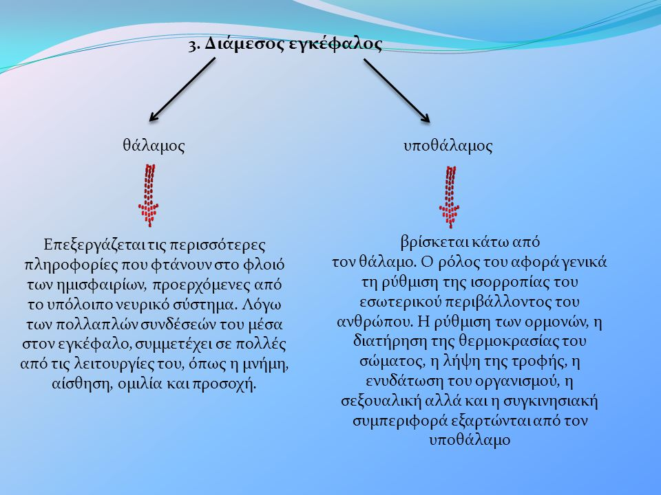 Ο εγκέφαλο ς χωρίζεται σε δύο εγκεφαλικά ημισφαίρια, το δεξί και το αριστερό.
