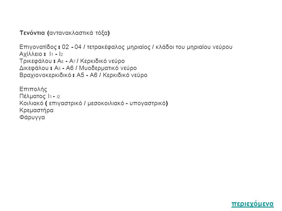 Τενόντια ( αντανακλαστικά τόξα ) Επιγονατίδος : 02 - 04 / τετρακέφαλος μηριαίος / κλάδοι του μηριαίου νεύρου Αχίλλειο : I 1 - Ι 2 Τρικεφάλου : Α 6 - Α 7 / Κερκιδικό νεύρο Δικεφάλου : Α 5 - Α6 / Μυοδερματικό νεύρο Βραχιονοκερκιδικό : Α5 - Α6 / Κερκιδικό νεύρο Επιπολής Πέλματος I 1 - Ι2 Κοιλιακό ( επιγαστρικό / μεσοκοιλιακό - υπογαστρικό ) Κρεμαστήρα Φάρυγγα περιεχόμενα