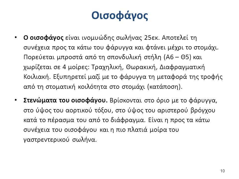 Οισοφάγος Ο οισοφάγος είναι ινομυώδης σωλήνας 25εκ.
