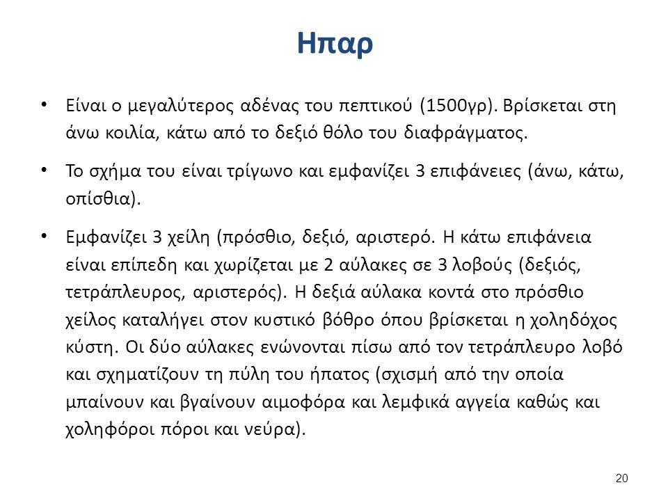 Ηπαρ Είναι ο μεγαλύτερος αδένας του πεπτικού (1500γρ).