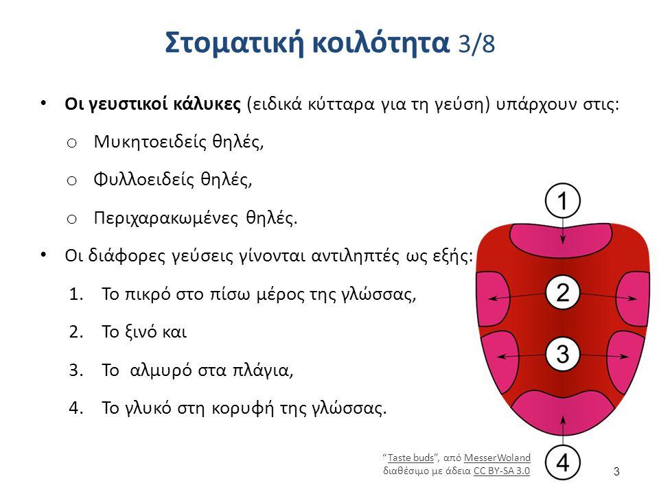Στοματική κοιλότητα 3/8 Οι γευστικοί κάλυκες (ειδικά κύτταρα για τη γεύση) υπάρχουν στις: o Μυκητοειδείς θηλές, o Φυλλοειδείς θηλές, o Περιχαρακωμένες θηλές.