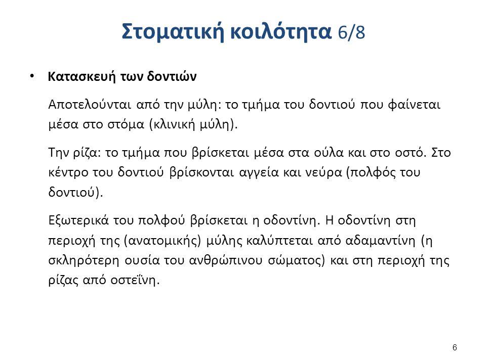 Στοματική κοιλότητα 7/8 Οι σιαλογόνοι αδένες παράγουν το σάλιο, το οποίο περιέχει: Βλέννα, ένζυμο πτυαλίνη (βοηθά στη πέψη), κάλιο και άλλα ιόντα.