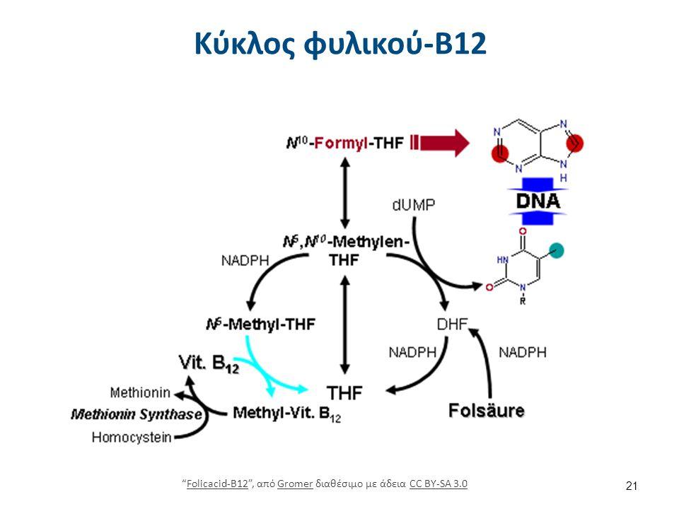 """Κύκλος φυλικού-Β12 21 """"Folicacid-B12"""", από Gromer διαθέσιμο με άδεια CC BY-SA 3.0Folicacid-B12GromerCC BY-SA 3.0"""
