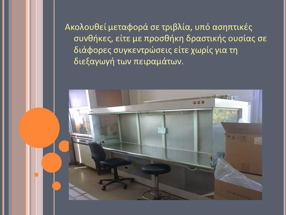 Ακολουθεί μεταφορά σε τριβλία, υπό ασηπτικές συνθήκες, είτε με προσθήκη δραστικής ουσίας σε διάφορες συγκεντρώσεις είτε χωρίς για τη διεξαγωγή των πειραμάτων.