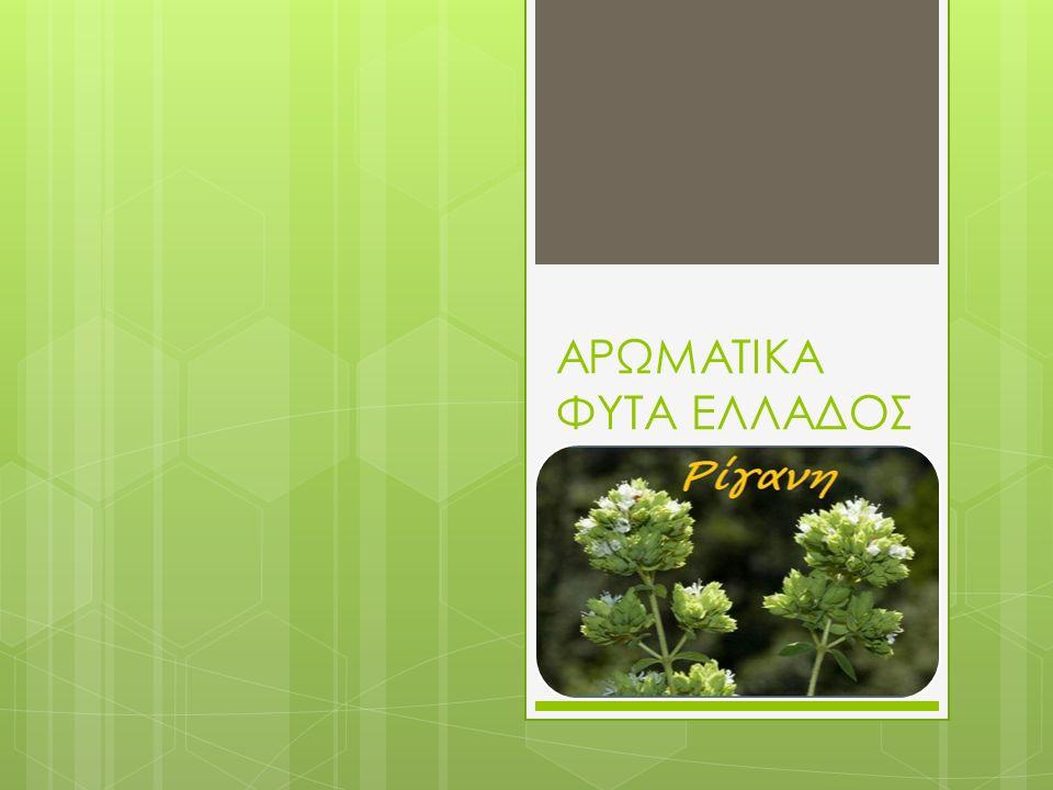  ΑΡΩΜΑΤΙΚΑ ΦΥΤΑ  Αρωματικά φυτά είναι μια ομάδα ειδών φυτικού βασιλείου με κοινό χαρακτηριστικό το ότι περιέχουν στα διάφορα μέλη τους αιθέρια έλαια, ουσίες που όταν ελευθερωθούν αφήνουν οσμή.
