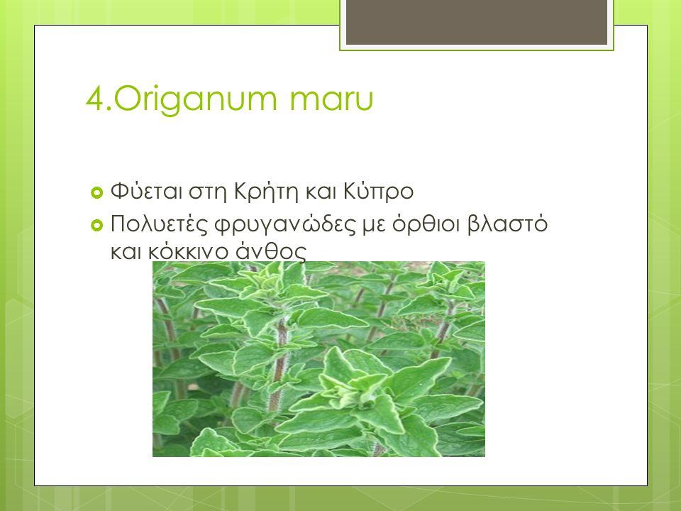 4.Origanum maru  Φύεται στη Κρήτη και Κύπρο  Πολυετές φρυγανώδες με όρθιοι βλαστό και κόκκινο άνθος