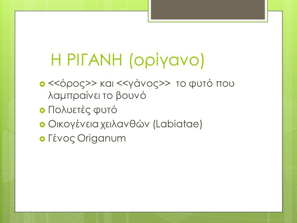 Η ΡΙΓΑΝΗ (ορίγανο)  > και > το φυτό που λαμπραίνει το βουνό  Πολυετές φυτό  Οικογένεια χειλανθών (Labiatae)  Γένος Origanum