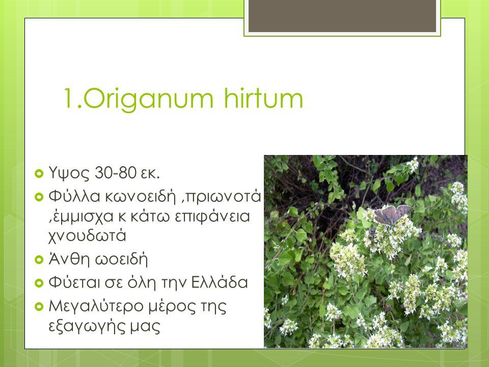 1.Origanum hirtum  Υψος 30-80 εκ.  Φύλλα κωνοειδή,πριωνοτά,έμμισχα κ κάτω επιφάνεια χνουδωτά  Άνθη ωοειδή  Φύεται σε όλη την Ελλάδα  Μεγαλύτερο μ