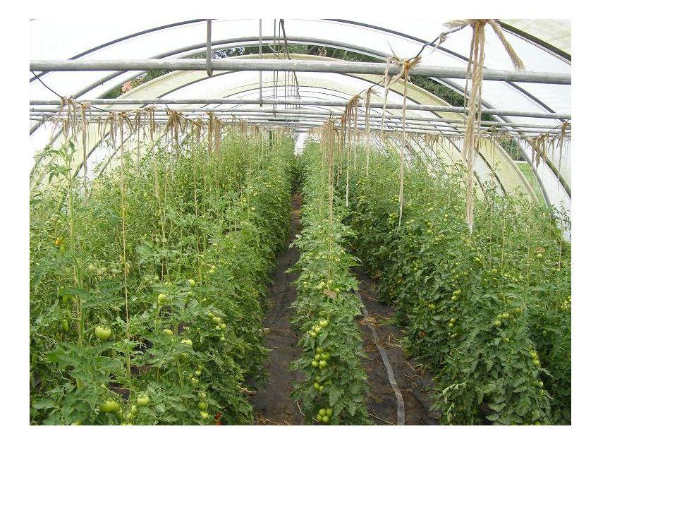Η καταπολέμηση των εχθρών των φυτών πραγματοποιείται με την εφαρμογή των ακόλουθων μέτρων σύμφωνα με τις αρχές της βιολογικής γεωργίας: -Επιλογή των κατάλληλων ειδών και ποικιλιών -Καλλιεργητικές μέθοδοι αντιμετώπισης εχθρών και ασθενειών -Μηχανικές μέθοδοι καλλιέργειας -Βιολογικές μέθοδοι καταπολέμησης των εχθρών των καλλιεργειών -Προστασία των φυσικών εχθρών των εντόμων -Τα συνθετικά γεωργικά φάρμακα απαγορεύονται