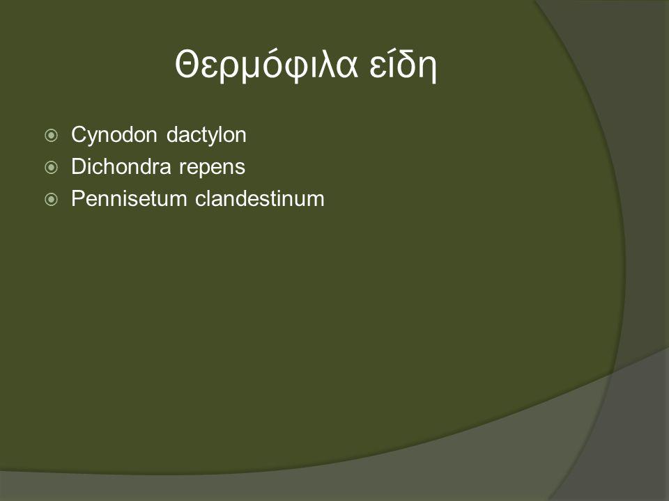 Θερμόφιλα είδη  Cynodon dactylon  Dichondra repens  Pennisetum clandestinum