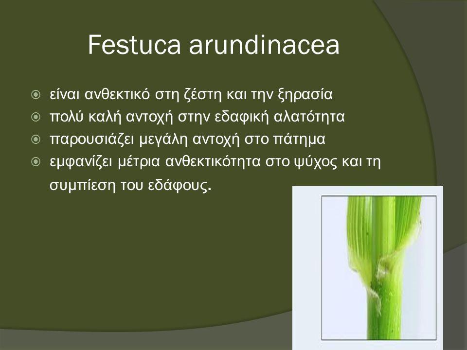 Festuca arundinacea  είναι ανθεκτικό στη ζέστη και την ξηρασία  πολύ καλή αντοχή στην εδαφική αλατότητα  παρουσιάζει μεγάλη αντοχή στο πάτημα  εμφανίζει μέτρια ανθεκτικότητα στο ψύχος και τη συμπίεση του εδάφους.