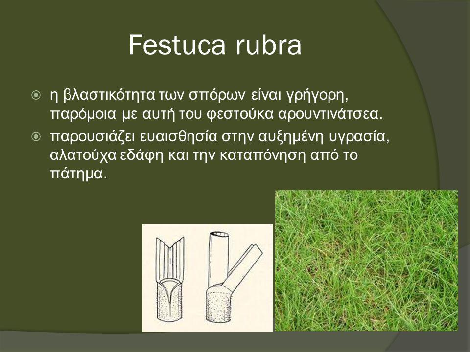 Festuca rubra  η βλαστικότητα των σπόρων είναι γρήγορη, παρόμοια με αυτή του φεστούκα αρουντινάτσεα.