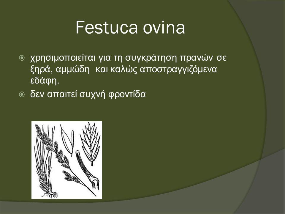 Festuca ovina  χρησιμοποιείται για τη συγκράτηση πρανών σε ξηρά, αμμώδη και καλώς αποστραγγιζόμενα εδάφη.
