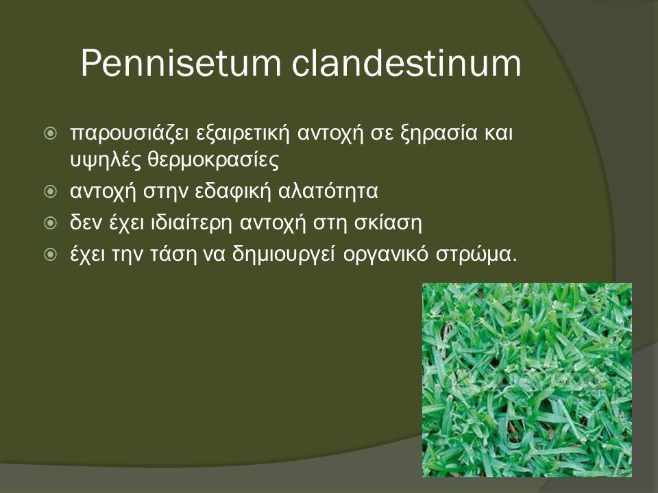 Pennisetum clandestinum  παρουσιάζει εξαιρετική αντοχή σε ξηρασία και υψηλές θερμοκρασίες  αντοχή στην εδαφική αλατότητα  δεν έχει ιδιαίτερη αντοχή στη σκίαση  έχει την τάση να δημιουργεί οργανικό στρώμα.