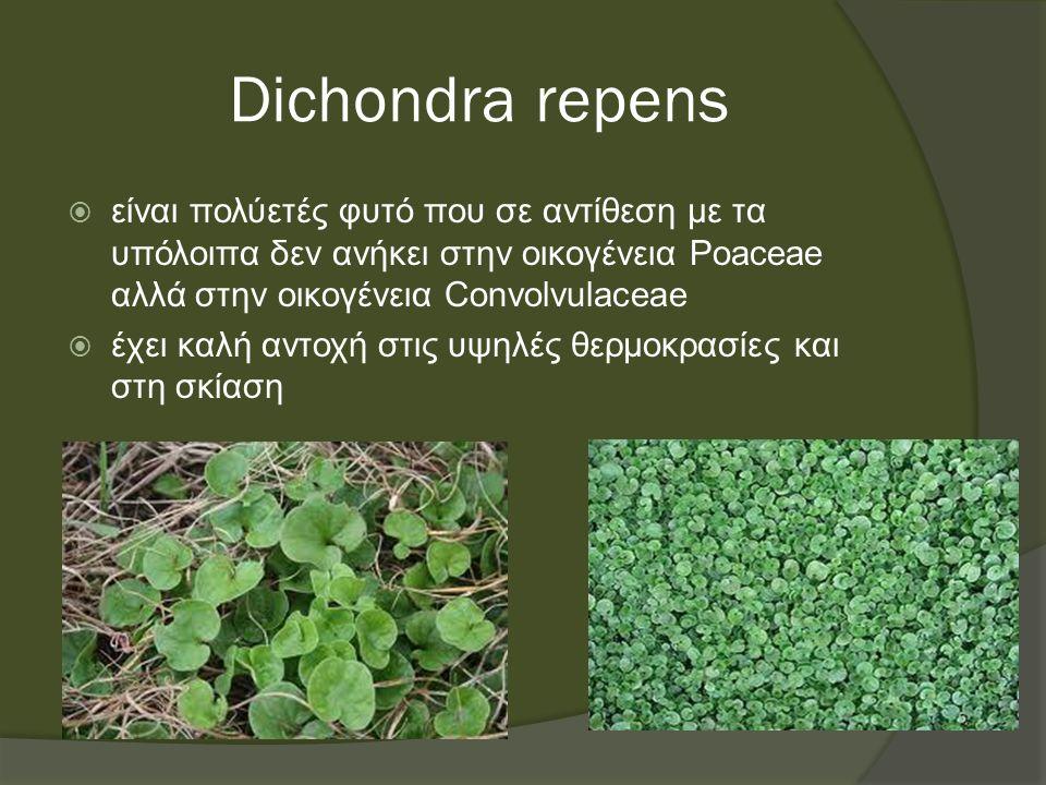 Dichondra repens  είναι πολύετές φυτό που σε αντίθεση με τα υπόλοιπα δεν ανήκει στην οικογένεια Poaceae αλλά στην οικογένεια Convolvulaceae  έχει καλή αντοχή στις υψηλές θερμοκρασίες και στη σκίαση