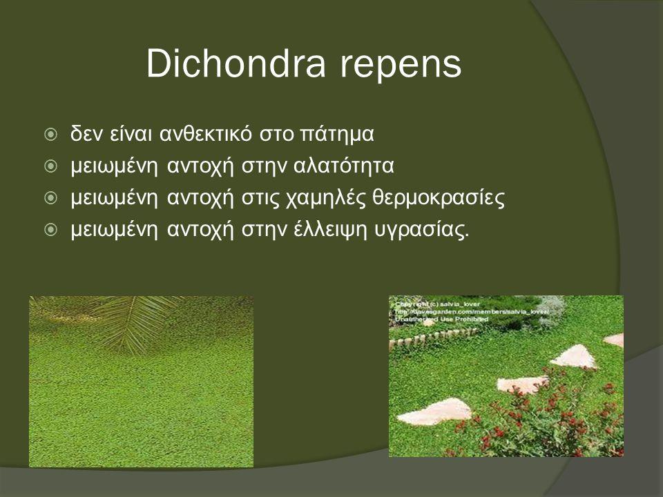 Dichondra repens  δεν είναι ανθεκτικό στο πάτημα  μειωμένη αντοχή στην αλατότητα  μειωμένη αντοχή στις χαμηλές θερμοκρασίες  μειωμένη αντοχή στην έλλειψη υγρασίας.