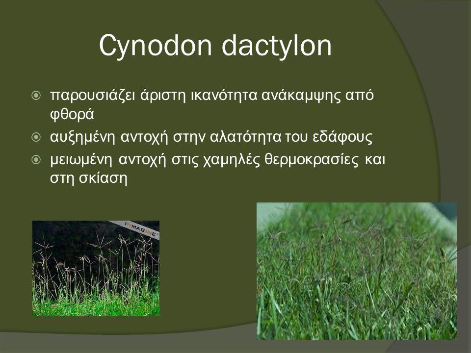 Cynodon dactylon  παρουσιάζει άριστη ικανότητα ανάκαμψης από φθορά  αυξημένη αντοχή στην αλατότητα του εδάφους  μειωμένη αντοχή στις χαμηλές θερμοκρασίες και στη σκίαση