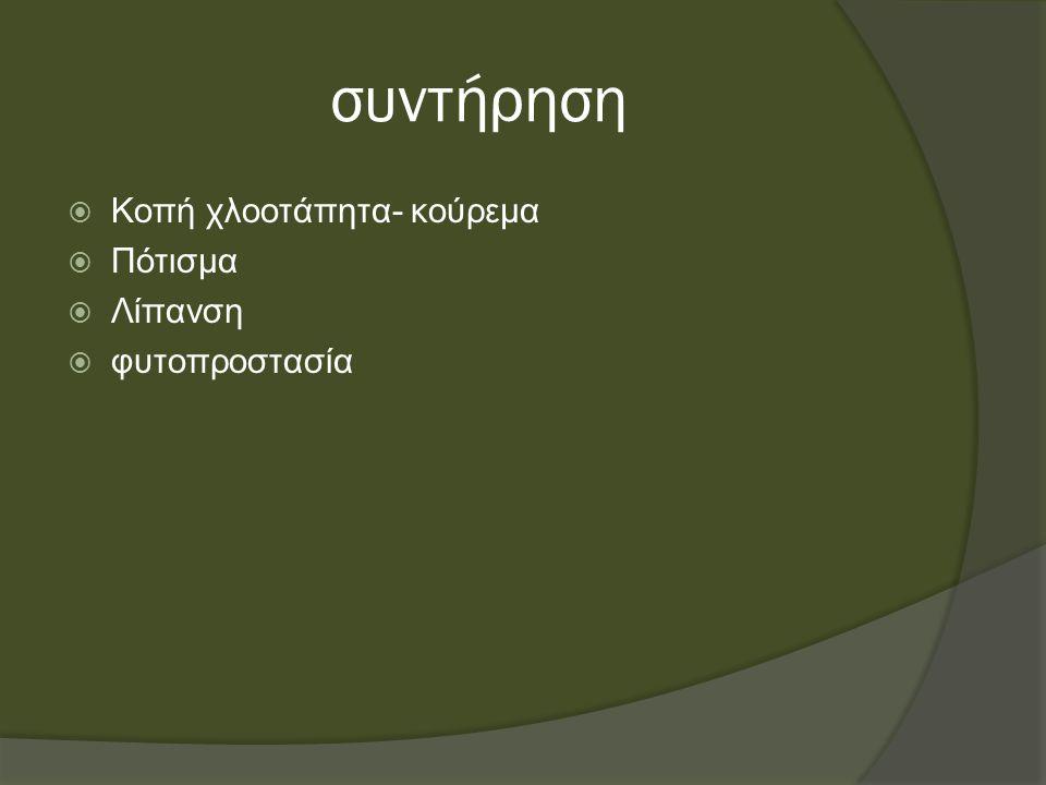 Σπορά χλοοτάπητα  Για την αναμόρφωση του αίθριου Χασιώτη, θα χρησιμοποιηθούν χλοοτάπητες τόσο για καλλωπιστικούς όσο και για εκπαιδευτικούς σκοπούς.
