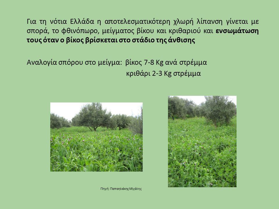 Για τη νότια Ελλάδα η αποτελεσματικότερη χλωρή λίπανση γίνεται με σπορά, το φθινόπωρο, μείγματος βίκου και κριθαριού και ενσωμάτωση τους όταν ο βίκος βρίσκεται στο στάδιο της άνθισης Αναλογία σπόρου στο μείγμα: βίκος 7-8 Kg ανά στρέμμα κριθάρι 2-3 Kg στρέμμα Πηγή: Παπαηλιάκης ΜΙχάλης