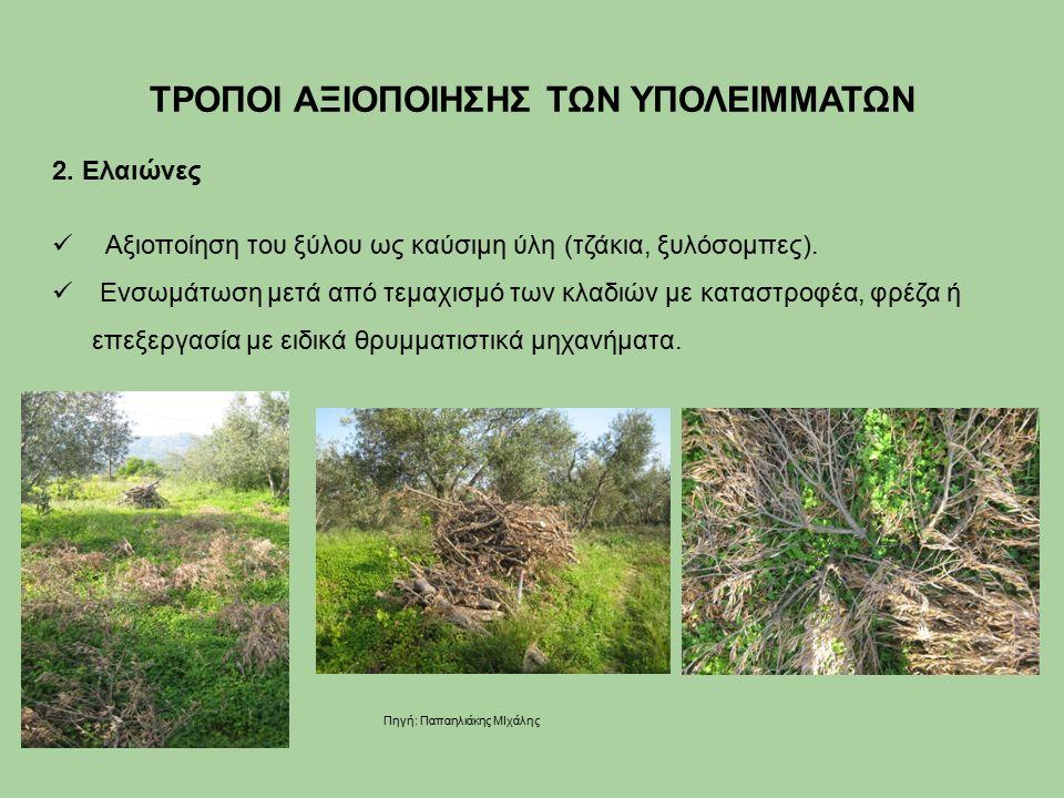 2. Ελαιώνες Αξιοποίηση του ξύλου ως καύσιμη ύλη (τζάκια, ξυλόσομπες).