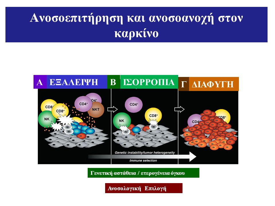 Ανοσοεπιτήρηση και ανοσοανοχή στον καρκίνο AΕΞΑΛΕΙΨΗΒΙΣΟΡΡΟΠΙΑ ΓΔΙΑΦΥΓΗ Γενετική αστάθεια / ετερογένεια όγκου Ανοσολογική Επιλογή
