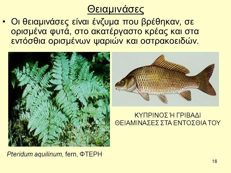 16 Θειαμινάσες Οι θειαμινάσες είναι ένζυμα που βρέθηκαν, σε ορισμένα φυτά, στο ακατέργαστο κρέας και στα εντόσθια ορισμένων ψαριών και οστρακοειδών.